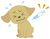 犬が吐くときは急性の病気の可能性もある