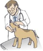 高齢犬のフィラリア・心臓病