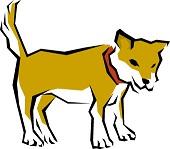 高齢犬の関節炎や骨折